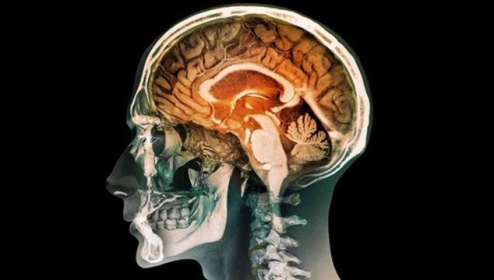 insan-beyni-üretildi.jpg